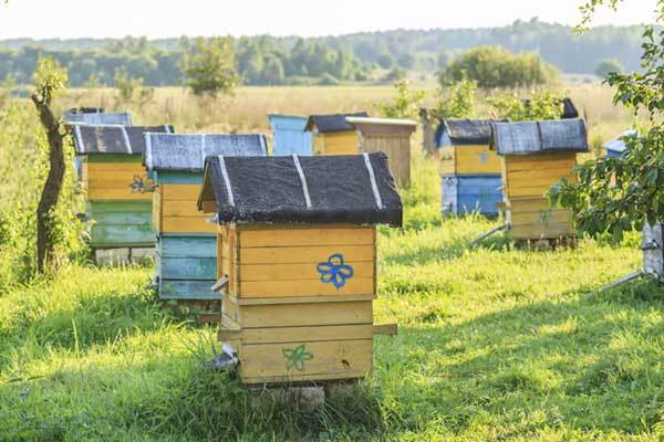 best-bee-hive-reviews